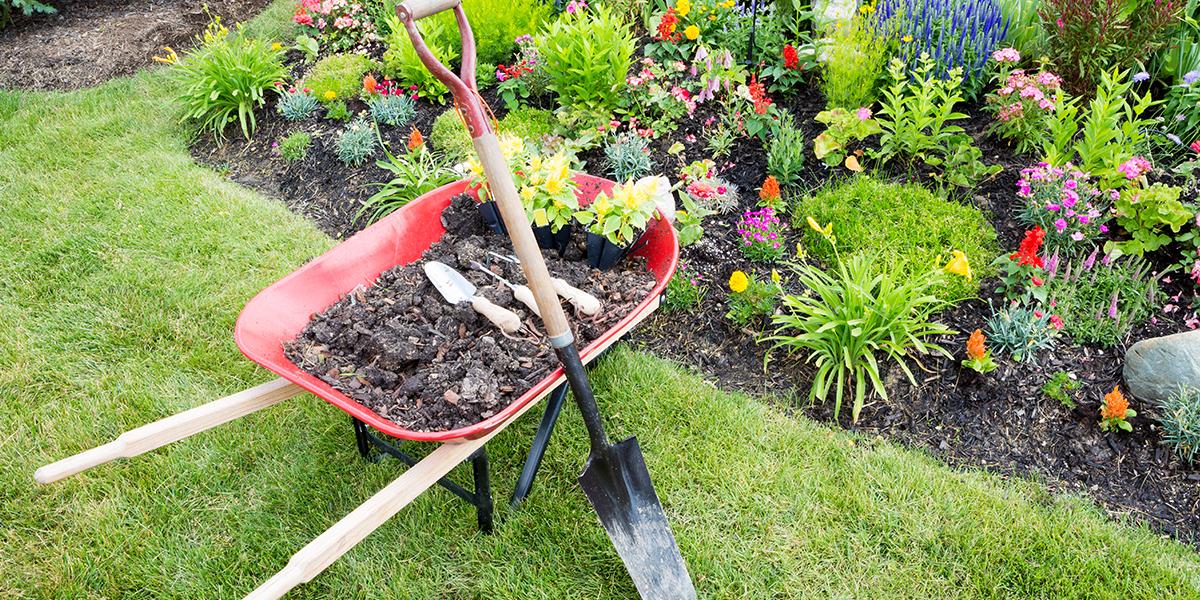 small garden with a wheelbarrow